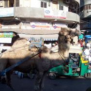 Day 09 (9th December): Ahmedabad / Surat / Bardoli