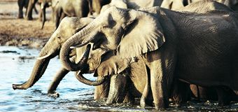 340x160_gillians-african-safari