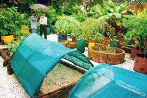 Gujarat Vidyapeeth terrace garden