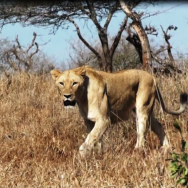 Day 4: June 3: Hluhluwe-iMfolozi Game Reserve  Included in Satyagraha Tour Itinerary