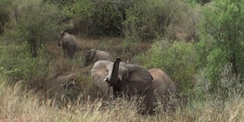 Elephant Sighting 2015 SA